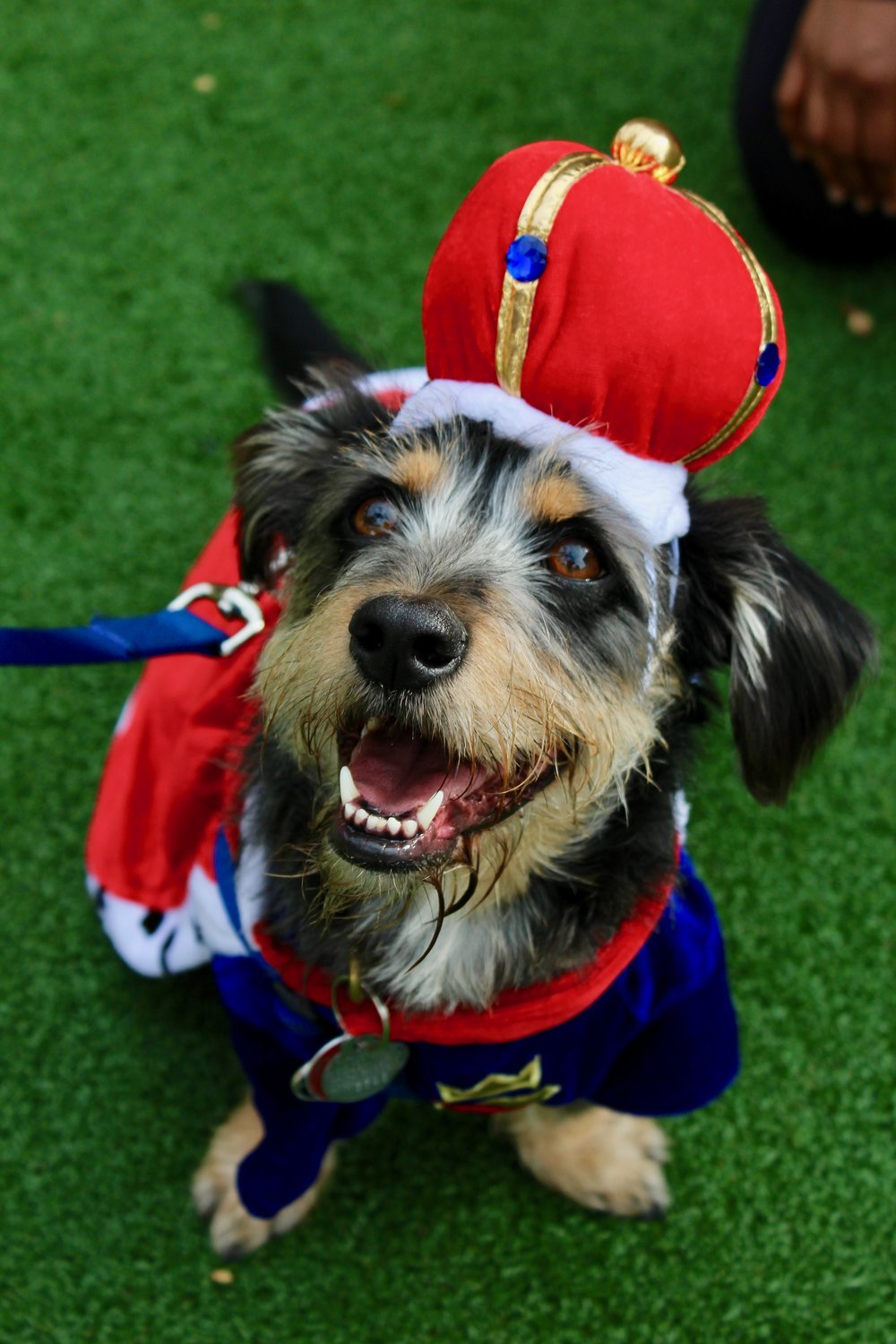 Sir Basile placed third in the event's costume contest. C ourtesy of the Atlanta Humane Society.