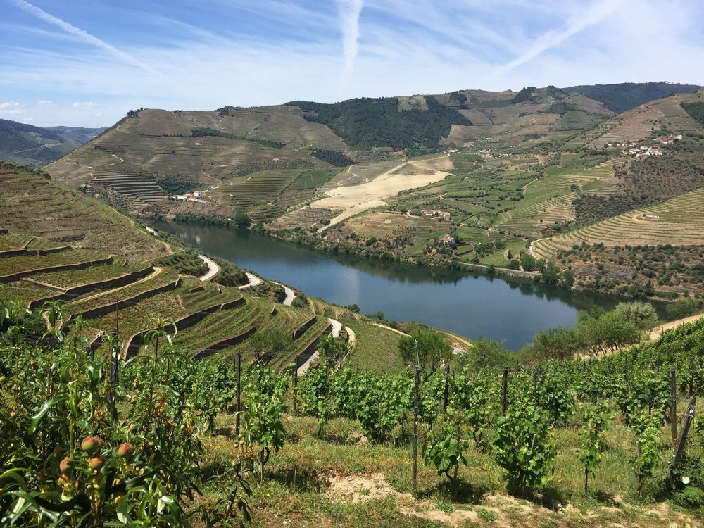 A beautiful view of the Douro River from the valley.